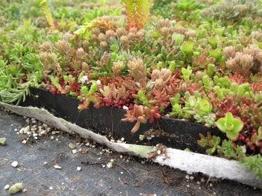 Toit plat végétal, verdure semi-intensive - UpGreen installation et entretien à Liège