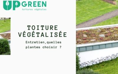 Entretenir sa toiture végétale : quelles plantes pour son toit végétalisé ?