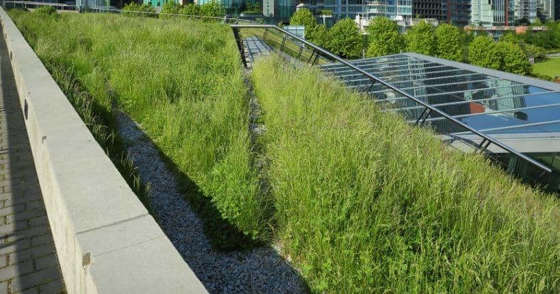 Entretien de la toiture végétalisée en Belgique
