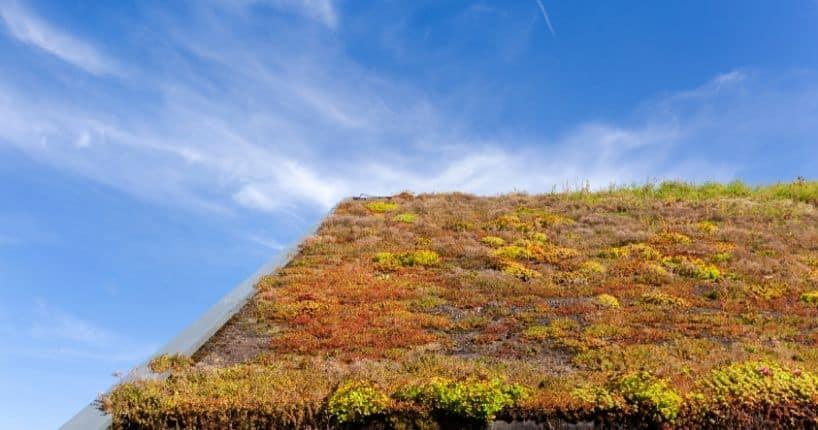 Plantes pour toiture végétalisée en Belgique