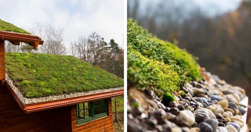 Toiture verte extensive : entretien en Belgique