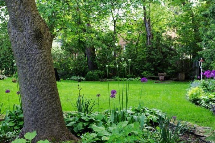 Entretenir la pelouse de son toit végétal contre la sécheresse