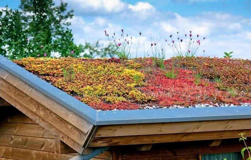 Entreprise de toits plats végétalisés à Liège - UpGreen