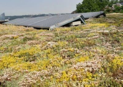 Toiture végétale autour de panneaux photovoltaïques