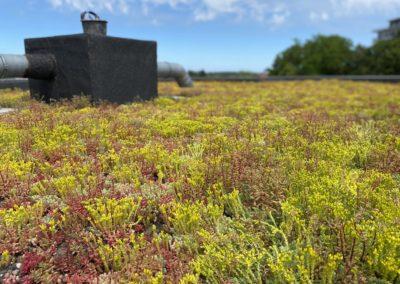 Installation de toiture végétale à Wavre